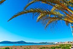 Palm door het overzees in Alghero Royalty-vrije Stock Foto