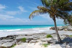 Palm door het overzees op een tropisch strand Royalty-vrije Stock Foto