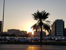 Palm in Doubai royalty-vrije stock foto