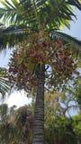 palm drie één van tousend stock fotografie