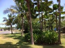 Palm drie van de Dominicaanse Republiek van Puntacana groene luchthaven Stock Afbeelding