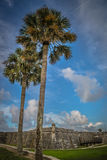 Palm drzew St Augustine fort Obrazy Royalty Free