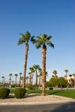 Palm drzewa Fotografia Royalty Free