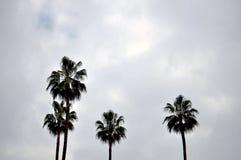 Palm drzewa Fotografia Stock