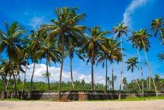 Palm drzewa na plaży Obrazy Royalty Free