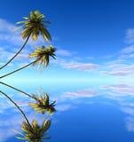 Palm drzewa odbija w wodzie Obrazy Stock