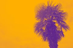 palm in a duotone red-blue gradient. Summer background. Gradient color. Filter effect stock images