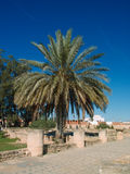 The palm in El Jem Royalty Free Stock Image