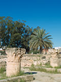 The palm in El Jem Stock Images