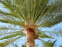 Palm en bladeren Royalty-vrije Stock Afbeelding