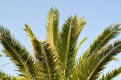 Palm en Blauwe Hemel Stock Afbeeldingen