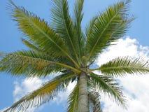 Palm en blauwe hemel Stock Fotografie