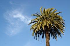 Palm en blauwe hemel stock foto's