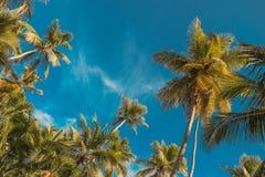 Palm en Blauwe Hemel Tropische paradijsprentbriefkaar stock foto's