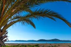 Palm en blauwe overzees in Alghero Royalty-vrije Stock Fotografie