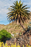 Palm en Cactussen. Royalty-vrije Stock Afbeelding