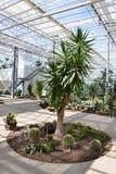 Palm en cactussen in Serre Royalty-vrije Stock Afbeelding