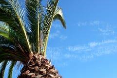 Palm en duidelijke de zomerhemel Royalty-vrije Stock Afbeeldingen