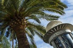 Palm en een aanplakbord in Cannes Royalty-vrije Stock Afbeelding