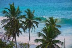 Palm en golven Stock Afbeeldingen