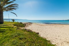 Palm en groen gras in het strand van Le Bombarde royalty-vrije stock fotografie