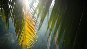 Palm en hemel Kerala India stock footage