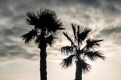 Palm en Hemel stock afbeelding