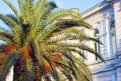 Palm en herenhuis in de achtergrondzomer royalty-vrije stock foto's