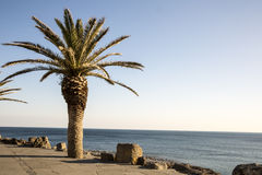 Palm en het overzees met duidelijke blauwe hemel Royalty-vrije Stock Afbeeldingen