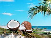 Palm en kokosnoten royalty-vrije stock foto