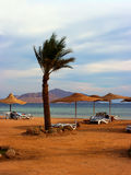 Palm en ligstoelen Royalty-vrije Stock Foto