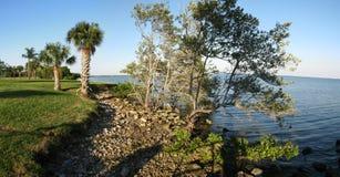 Palm en mangrove door oceaan Royalty-vrije Stock Fotografie