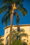 Palm en oud huis in Menton Stock Foto's