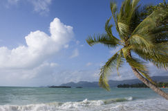 Palm en overzeese meningen Royalty-vrije Stock Foto