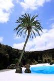 Palm en Pool stock afbeeldingen