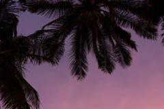 Palm en purpere zonsondergang Stock Afbeeldingen
