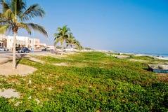 Palm en strand Royalty-vrije Stock Foto's