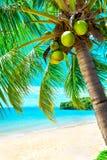 Palm en tropisch strand Royalty-vrije Stock Afbeelding