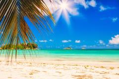 Palm en tropisch strand Bladeren van Palmen in Zonlicht Natuurlijke Achtergrond voor de Kaart van de Vakantiereis gestemd Stock Afbeeldingen