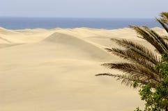 Palm en woestijn Stock Afbeelding