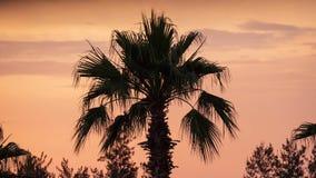 Palm en wolken bij de romantische tijdspanne van de zonsondergangtijd stock footage