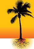 Palm en wortels royalty-vrije illustratie