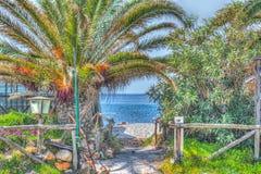 Palm en zand in een tropisch strand in hdr royalty-vrije stock afbeeldingen