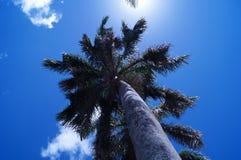 Palm en zonnige hemel Stock Afbeeldingen