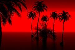 Palm en zonsondergang Stock Foto's