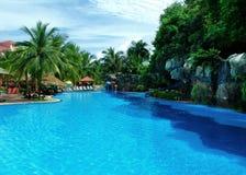 Palm en zwembad Stock Afbeeldingen