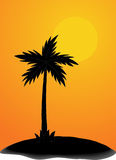 Palm in evening Stock Photography