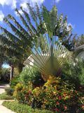 Palm exotic Plant Bush Royalty Free Stock Images