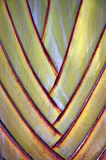 Palm Fan. Leaf bases on a Traveler's Palm (Ravenala madagascariensis stock photography
