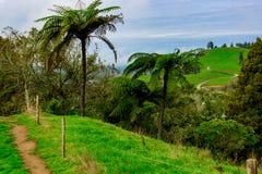 Palm Fern on a Hilltop Waitomo, New Zealand. Palm fern on a Waitomo hilltop, Waitomo, Waikato, New Zealand, Aotearoa Royalty Free Stock Photo